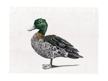 Marini Ferlazzo Birds Tea Towel 50x70cm Chestnut Teal Duck