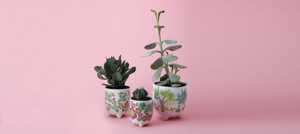 Caring for your Cacti and Succulents with Arid Garden